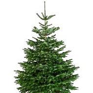 Kerstboom hoogte ca 1,90 meter